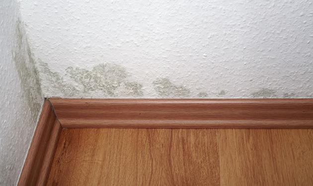 Début de traces de moisissure dans un appartement