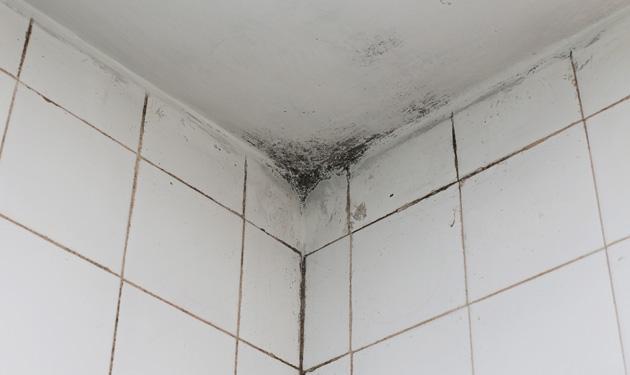 Les moisissures sont souvent trouvées dans les salles d'eau dans les appartements